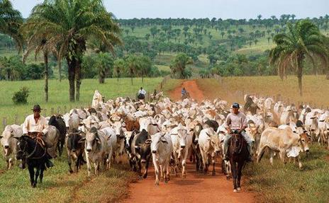 cattle-ranching-in-brazil-is-a-major-drive-of-deforestation.jpg